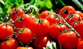 【栄養学】トマトの栄養成分について紹介!トマトの効能と栄養効果を高めるコツ